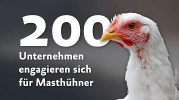 Über 200 Unternehmen erhöhen Masthuhn-Standards