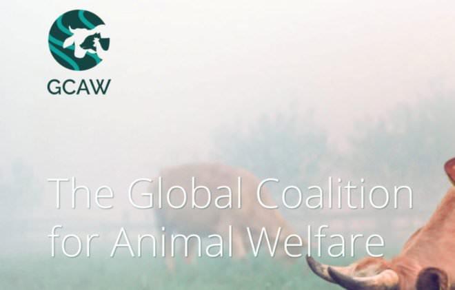 Global Coalition for Animal Welfare