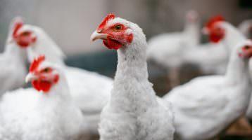 Wegweisende Entwicklungen im LEH und Tierschutz