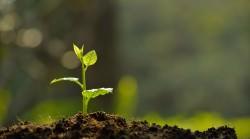 Forsa-Umfrage Nachhaltigkeit