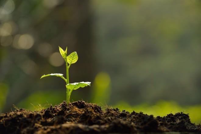 Nachhaltigkeit - Junge Pflanze