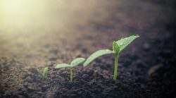 Unser Ernährungssystem: Lehren aus Covid-19