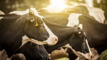 Frankreich will Nutztierhaltung reduzieren