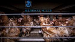 General Mills ohne Käfigeier